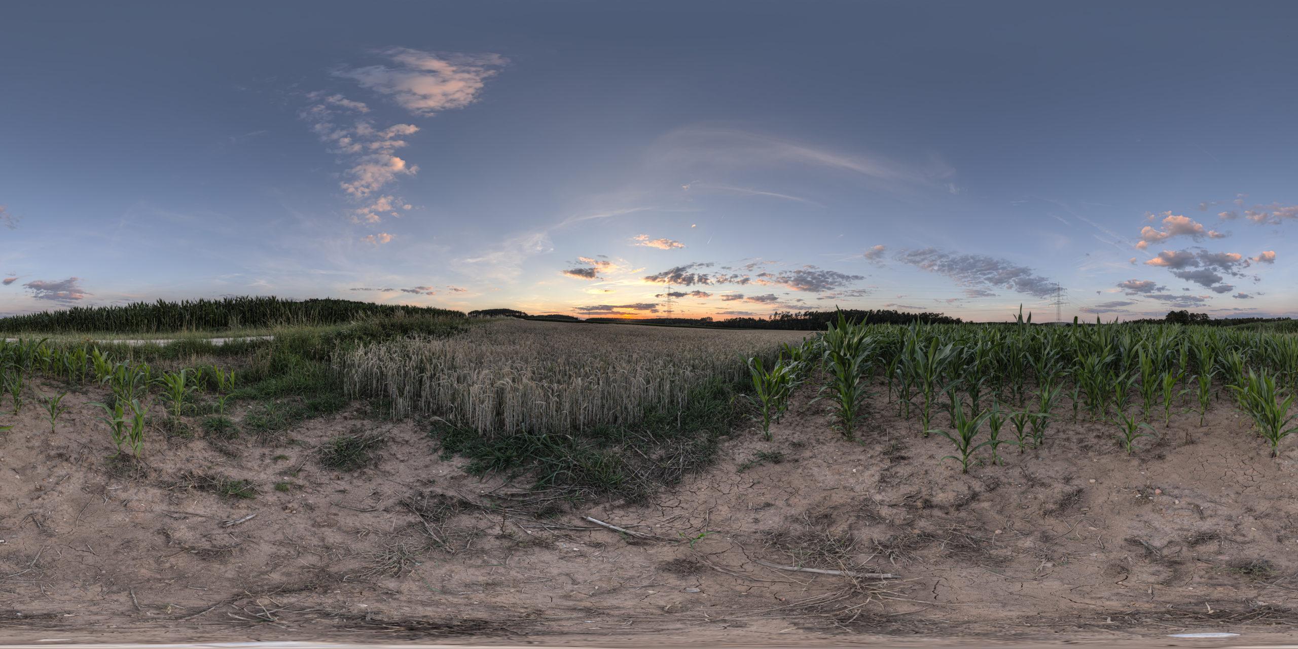 HDRI-Skies-Sunset-Cornfield-Georgensgmünd