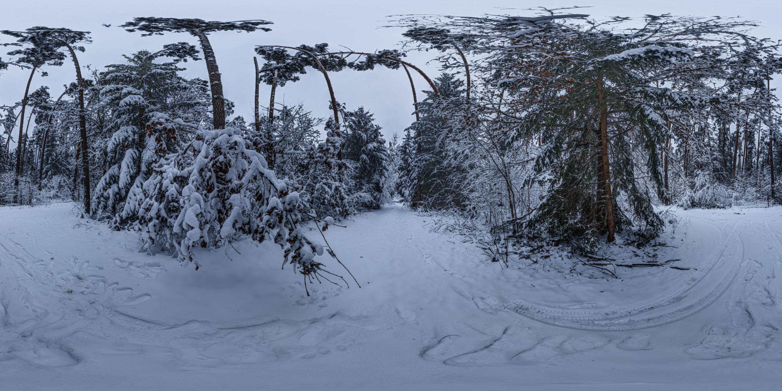 HDRI-Skies-Snowy-Forest-Petersgmünd