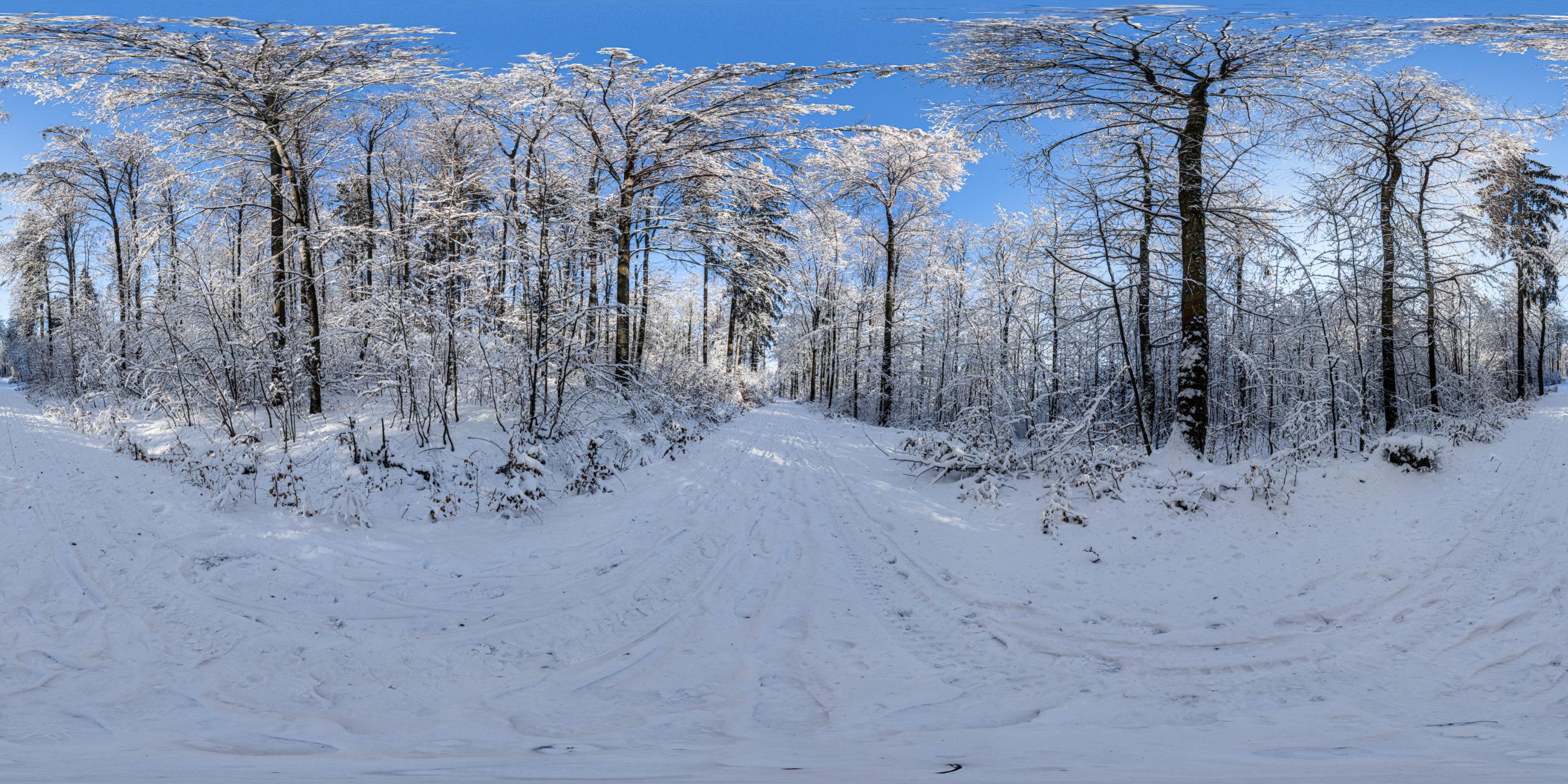 HDRI-Skies-Snowy-Forest-Uhlberg