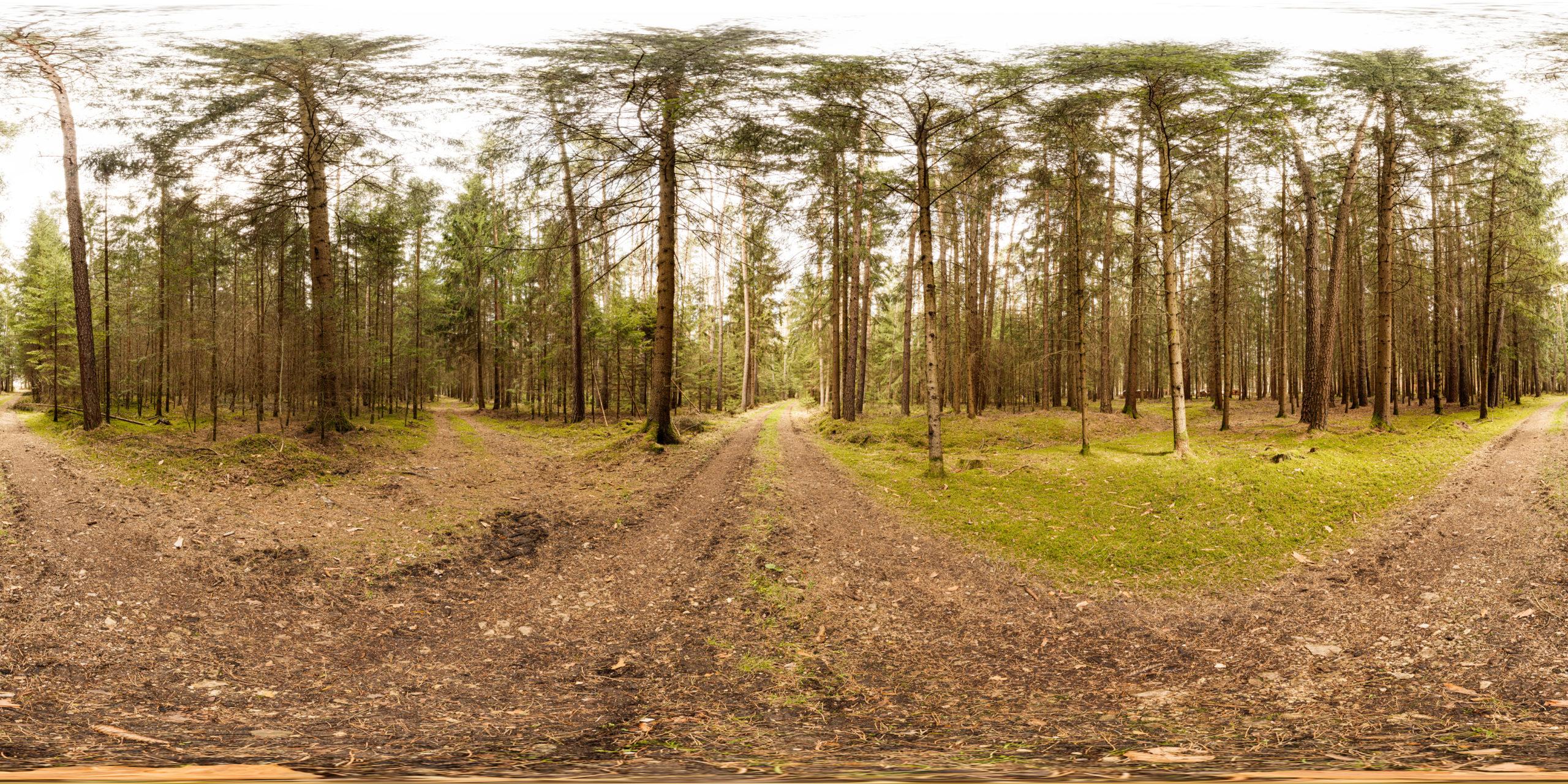 HDRI-Skies-Forest-Path-Altenheideck